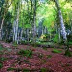 Selva de Irati Otoño en Navarra