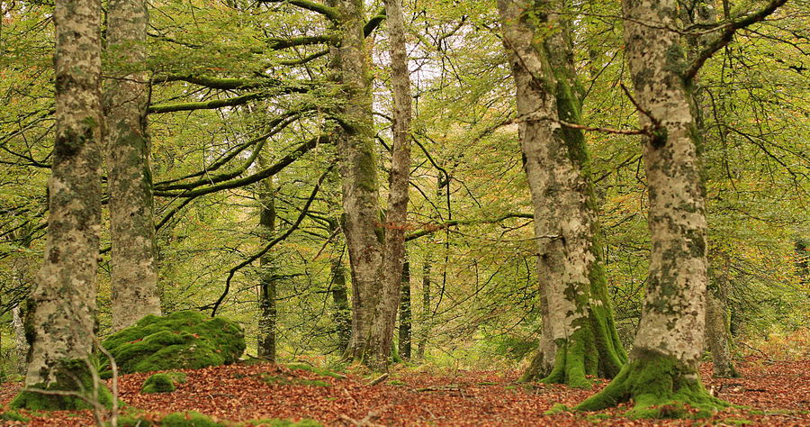 Selva de Irati Navarra